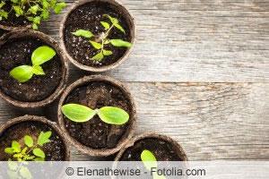 Trauerm cken in blumenerde bek mpfen fliegen an pflanzen for Kleine fliegen in blumenerde hausmittel