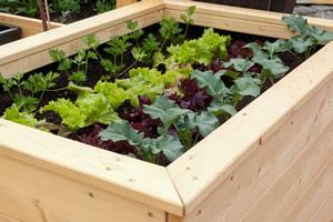 Gemüsepflanzung im Hochbeet