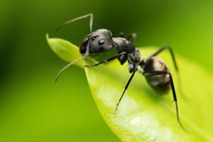 hausmittel gegen ameisen im haus das hilft wirklich. Black Bedroom Furniture Sets. Home Design Ideas