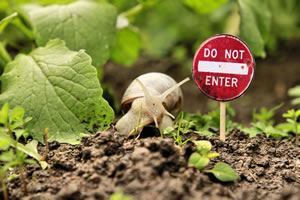 Pflanzen schützen