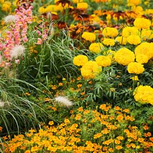 Gelbes Blumenbeet