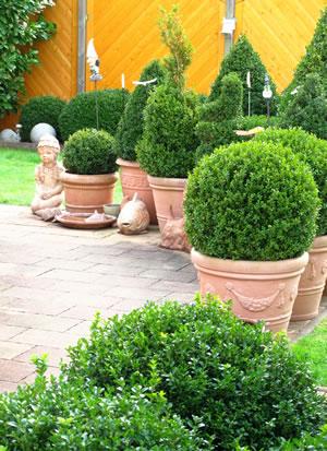 Vorgarten anlegen pflanzen und vorgartenzaun bauen - Pflanzen vorgarten ...