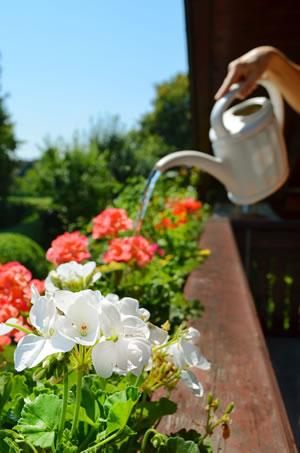 pflege anleitung f r balkonpflanzen und balkonblumen. Black Bedroom Furniture Sets. Home Design Ideas