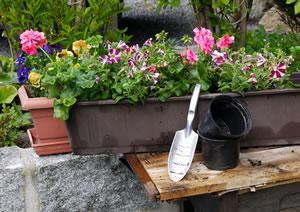 die besten balkonpflanzen f r sonnige und schattige balkone On halbschattige balkonpflanzen