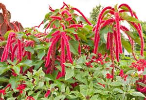 Unkraut im rasen vernichten rasenunkr uter bestimmen - Gartenpflanzen bestimmen ...