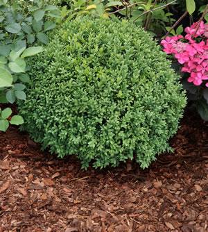 steinpflanzen die beliebtesten arten pflege tipps. Black Bedroom Furniture Sets. Home Design Ideas