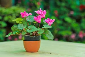 Pflanzen f r das schlafzimmer welche zimmerpflanzen for Was macht man gegen kleine fliegen in der blumenerde