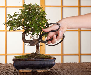 Bonsai-Schere