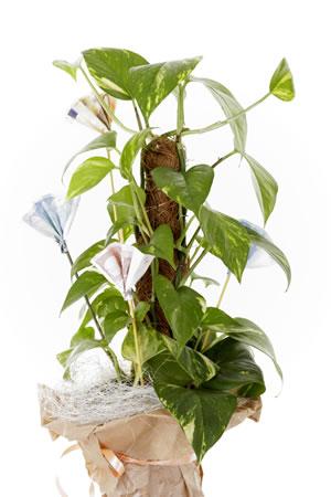 pflegeleichte topfpflanzen beliebte pflanzen f r drinnen. Black Bedroom Furniture Sets. Home Design Ideas