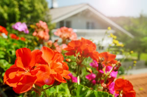 die besten balkonpflanzen f r sonnige und schattige balkone. Black Bedroom Furniture Sets. Home Design Ideas