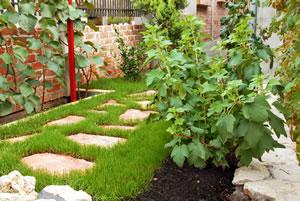 kiwi pflanzen sorten anbau und pflege im garten. Black Bedroom Furniture Sets. Home Design Ideas