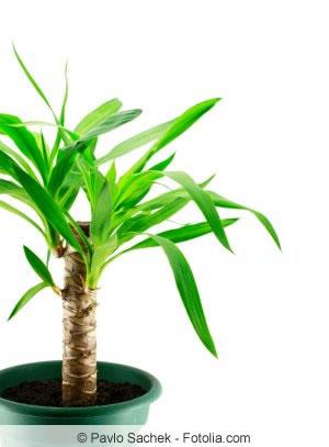 pflanzen f r das schlafzimmer welche zimmerpflanzen eignen sich. Black Bedroom Furniture Sets. Home Design Ideas